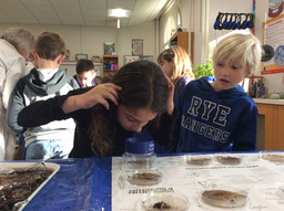 Knowledge Spotlight: Grade 3 Students Measure Health of Blind Brook Stream