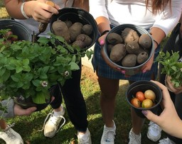 AP Environmental Science Students Take Heirloom Potatoes from Garden to Table